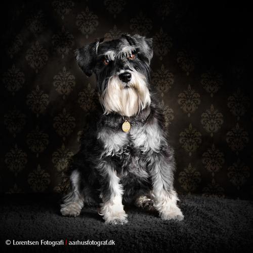 hundefotografering-27263-136